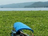 Eceng Gondok Jebak Wisatawan di Danau Jatiluhur