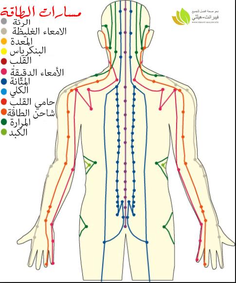 مسارات الطاقة بالجسم