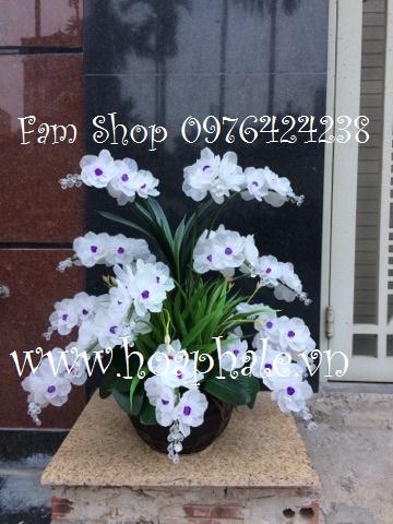 Hoa lan ho diep trang