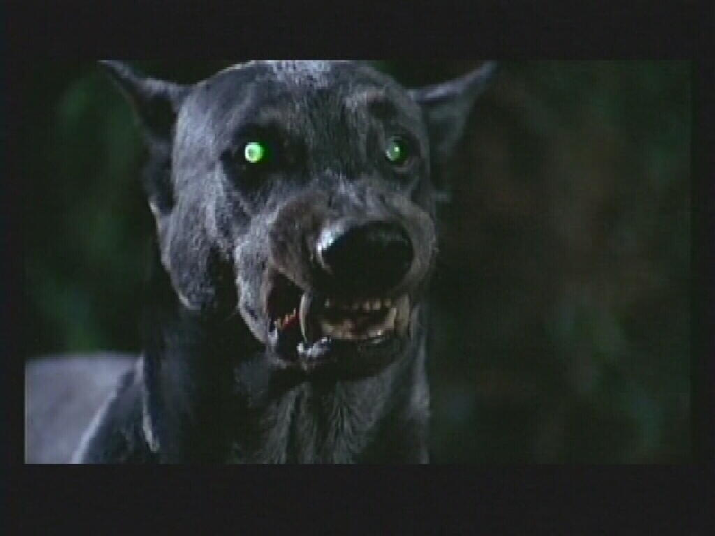 Vampire Dogs Pictures