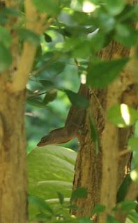 Small lizard in a tree.
