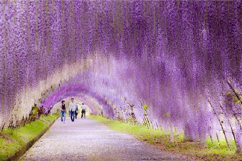 Virág alagút Japánban