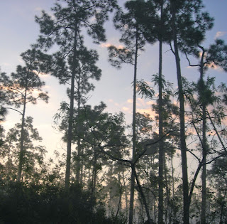 camping at long pine key in the Everglades