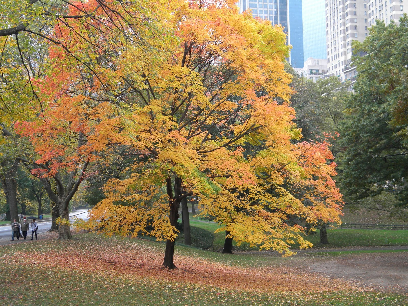 Autumn Colors Central Park, New York City