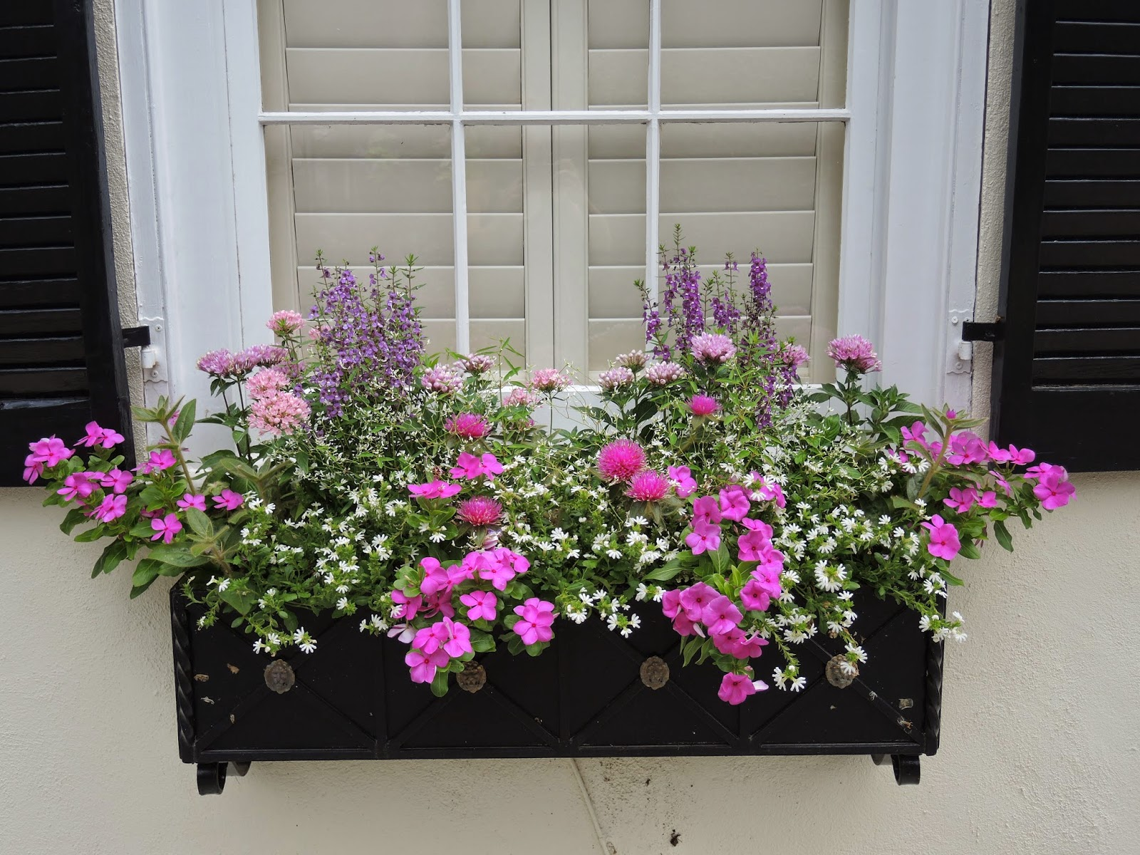 full sun window box low water drought tolerant vinca