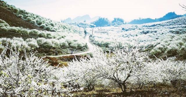 Khám phá vẻ đẹp du lịch Điện Biên vào mùa hoa ban