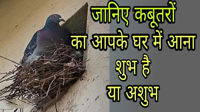 घर में कबूतरों का आना शुभ माना जाता है या अशुभ आइए जानें
