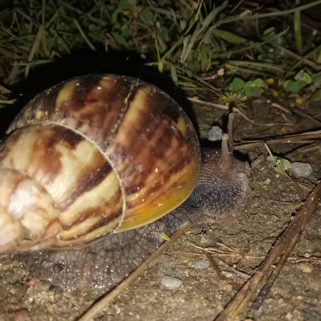 Snail slowly reaching destination