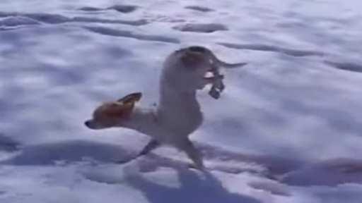 Perrito nieve camina patas delanteras