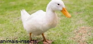 5 من أخطر الطيور بالعالم   إذا شاهدتها فعليك الفرار فوراً !!!