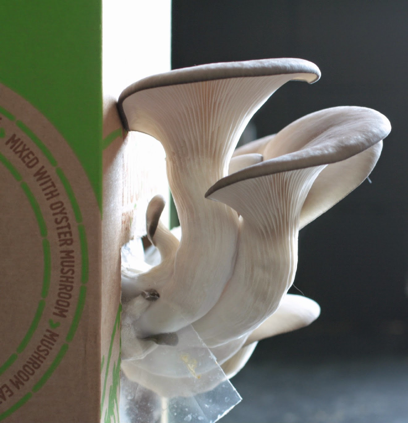 GroCycle use waste coffee grounds to grow delicious gourmet oyster mushrooms and now with one of their kits you can enjoy fresh mushrooms in your own kitchen