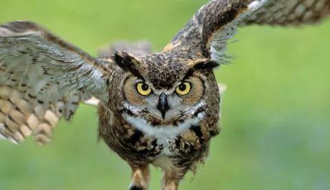 इस जीव की आंखे नहीं घुमती है गर्दन, अक्ल में भी है बुद्धिमान,जानें क्या है राज
