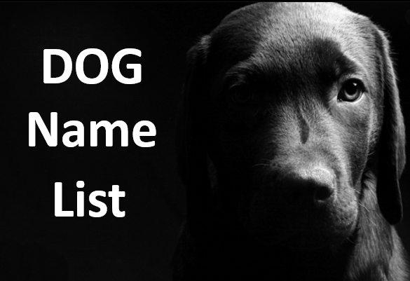 good dog name india, dog name in india, india dog name, male dog names, female dog name