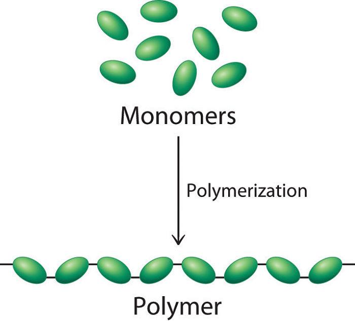 Digujo de la polimerización de un monómero