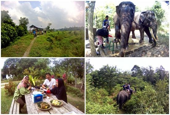 gallery-tour-gajah-eloratour