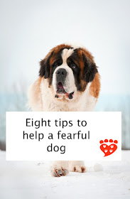Eight tips to help a fearful dog, including making feeling safe a priority, and be in it for the long haul. Poster features a St. Bernard