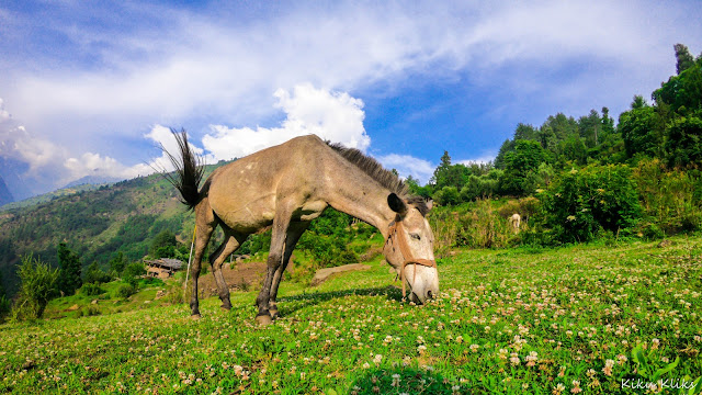 A horse in the mountains