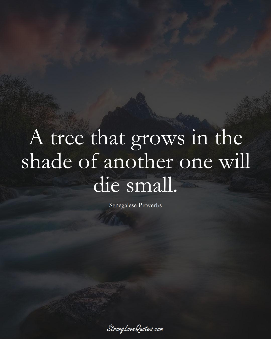 A tree that grows in the shade of another one will die small. (Senegalese Sayings);  #AfricanSayings