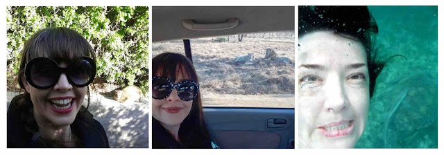 Lion, Dassie and Turtle selfies