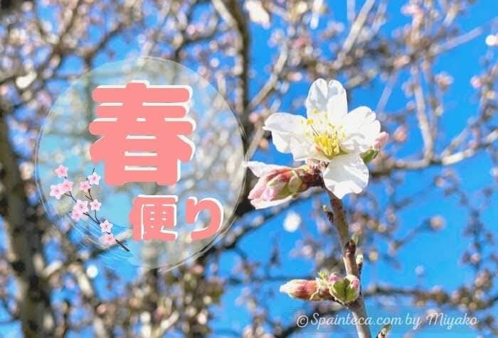 ピンク色したスペインのアーモンドの花と青い空