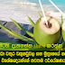 Tender coconut water, kidney and bladder stones, corrosive Result Filipino experts researchers