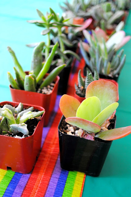 Succulents make great party favors. Get more succulent love at Fizzy Party