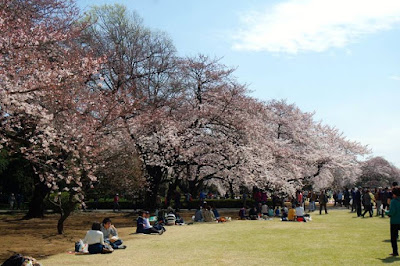 Hanami at Shinjuku Gyoen in Spring