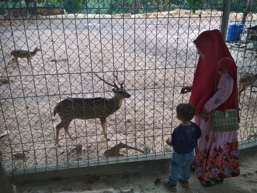 Objek Wisata Taman Rusa Sekupang Kian Diminati Warga Batam