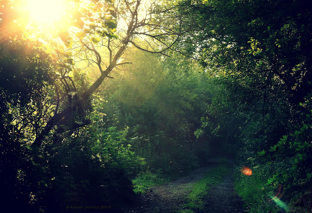 morning sun flare in forest, dirt road between dark trees, Connemara, Galway, Ireland