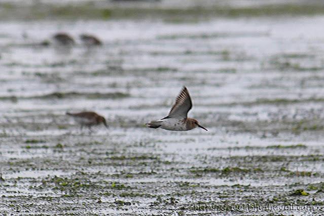 Bird watching in Texel Island