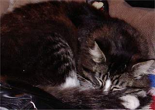 Stripe sleeping