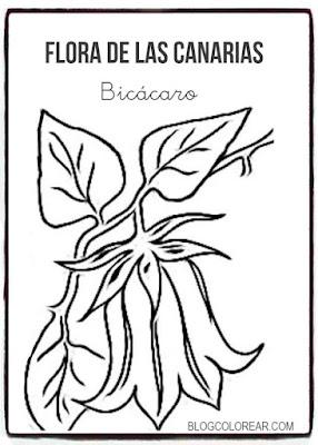 Colorear dibujo de Bicácaro canario