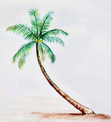 palm tree drawing color
