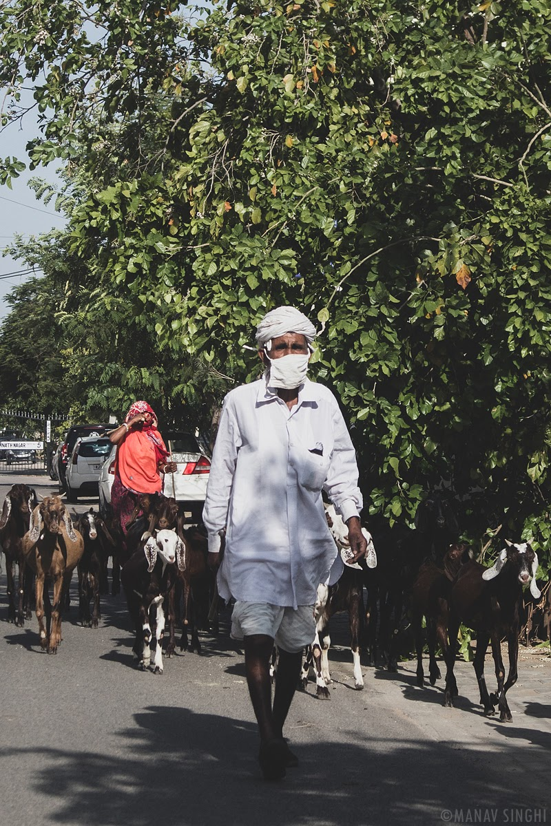 A Shepherd with Face Mask. - Took this Street Photography Shot on 21-May-2020 at Jai Jawan Colony, Jaipur.