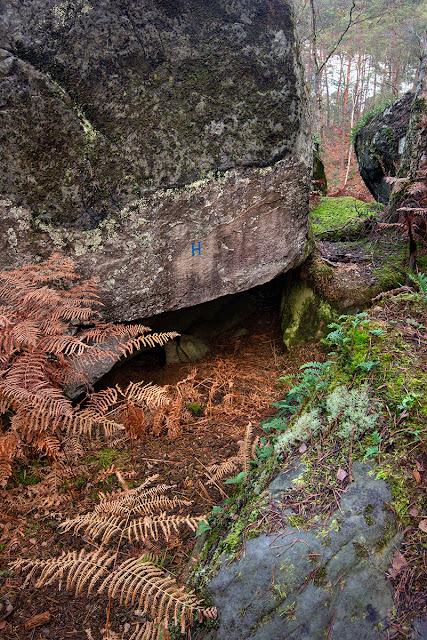 Long Boyau, Forêt de Fontainebleau, sentier n°8.
