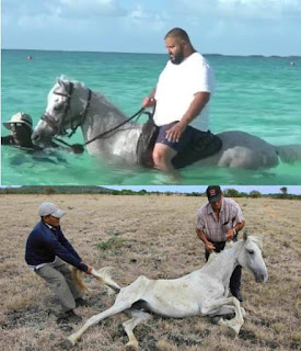 dj khaled, dj khaled horse, dj khaled killed a horse