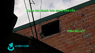 Âm thanh kpop bên ngoài nhà yến cấp 4 chi phí thấp vùng ít chim.