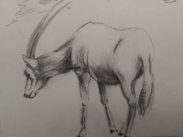 African animal drawing