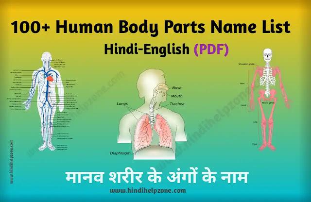 100+ Human Body Parts Name Hindi-English (pdf) - मानव शरीर के अंगों के नाम