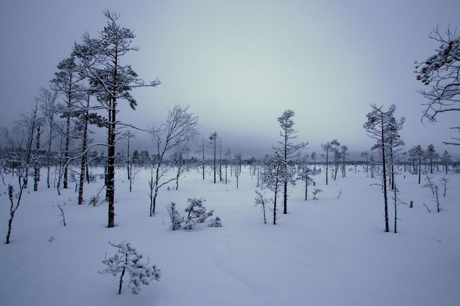 Heikinjärvenneva
