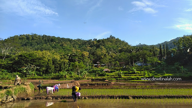 Desa Wisata Sebagai Penggerak Perekonomian Desa – Dewi Tinalah Kulon Progo