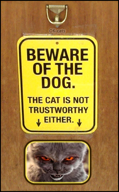Photoshopped Cat picture • Beware of the døg, but the cat is NOT TRUSTWORTHY EITHER!