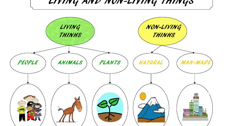 Natural Science 1st And 2nd Grades Living And Non Living border=