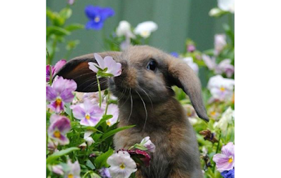 Signs and symptoms of Rabbit being ill