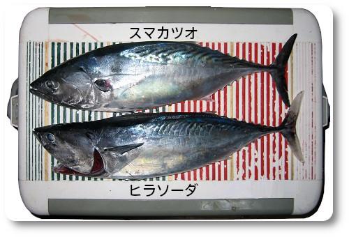 関西の船釣りで釣れる 竿とリール 南紀 スマ カツオ