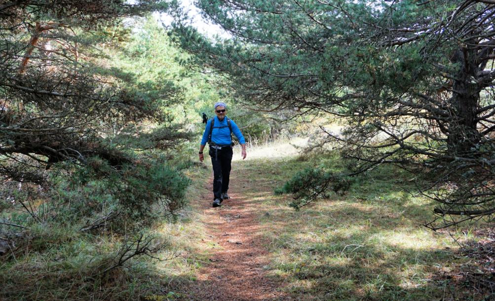 Trail near La Colle de Rougiès