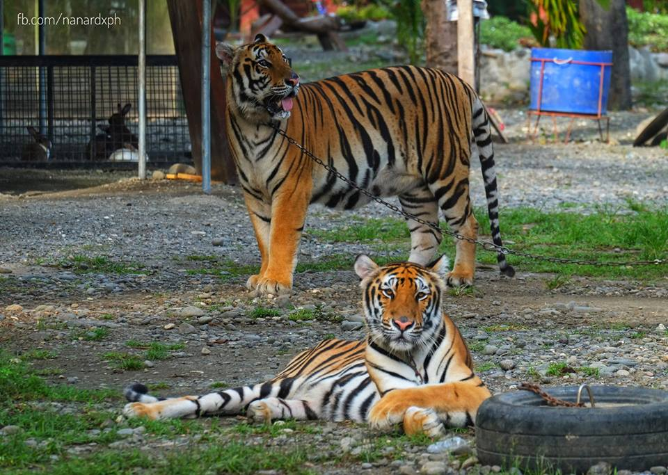 Genalin Park Zoo & Rescue Center in Tacurong City
