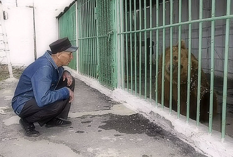 Here the bear is cutting the life sentence like human beings