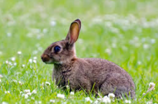 rabbit essay in hindi