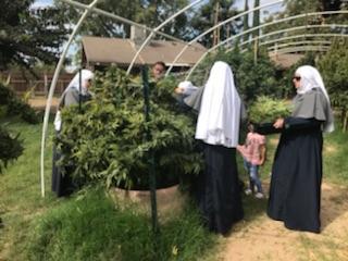 Cannabis Kate: Sister Mary Batshit Crazy